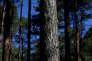 En2016, les forêts ont vu leur prix moyen augmenter de 2,1%, à 4100euros l'hectare. Sur trois ans, la hausse des prix du chêne atteint de 10% à20% par an