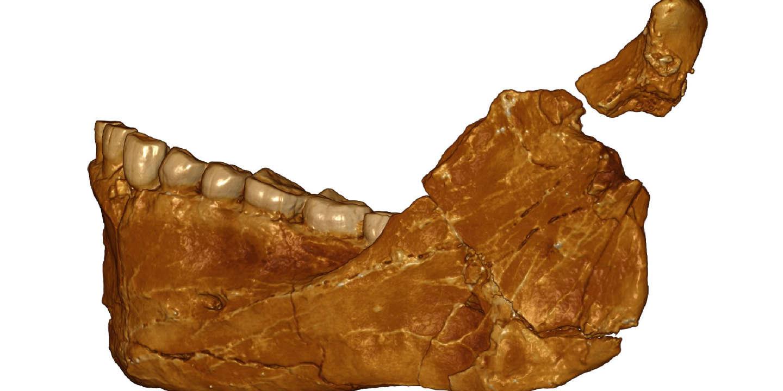 La disparition de l'homme de Néandertal serait plus ancienne que ce que l'on croyait - Le Monde