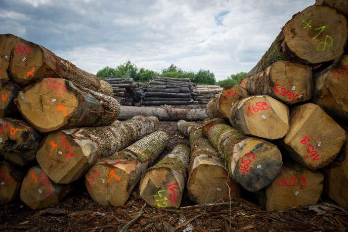 Provence-Alpes-Côte d'Azur (PACA) est la troisième région forestière avec 1,5 million d'hectares de forêt, soit 9 % de la surface boisée du pays.