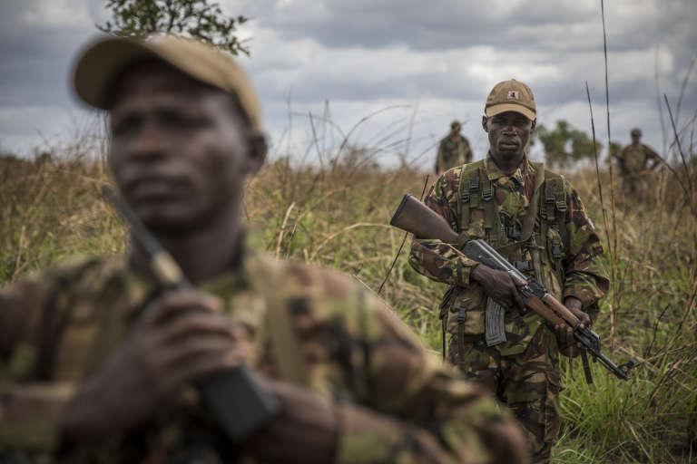 Des rangers patrouillent dans le parc national de la Garamba (RDC) pour protéger les dernières girafes du Kordofan ainsi que les scientifiques qui les étudient et tentent de les sauver de l'extinction.