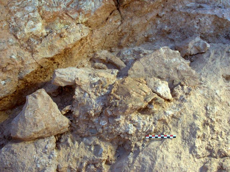 Les fossiles tels qu'ils ont été découverts.