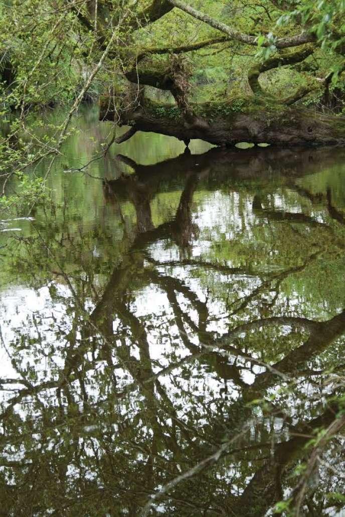 La biodiversité de la réserve de vie sauvage du Trégor.