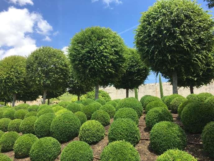 Buis et tilleuls taillés, dans le jardin du château d'Amboise.