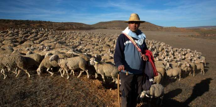 Originaire du Maroc, Hassan Bellahmama est berger à Alfambra, dans le centre de l'Espagne.