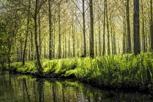 La « Venise verte», vrai labyrinthe aquatique.