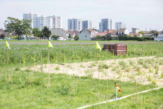 A la ferme urbaine d'Olivier Darné.