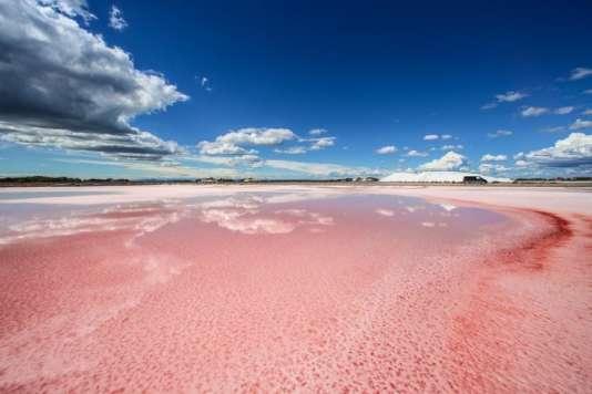 Le rose domine dans les marais salants d'Aigues-Mortes.