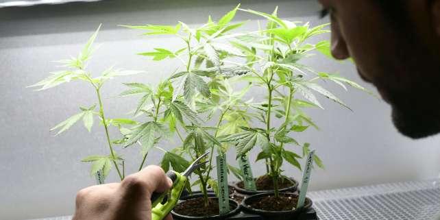 30% des étudiants interrogés par la Smerep déclarent consommer du cannabis.