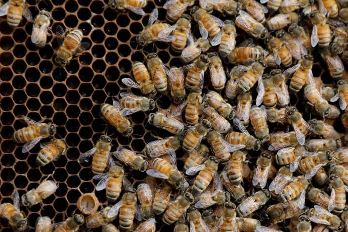 Les apiculteurs évoquent des taux de perte dépassant les 80% dans certains territoires.