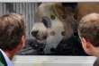 L'emménagement à Berlin des deux animaux, considérés comme des trésors nationaux en Chine, constitue un nouvel épisode de la «diplomatie des pandas» instaurée par Pékin pour entretenir ses bonnes relations avec ses partenaires.
