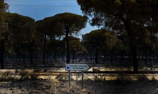 Une photo réalisée le 25 juin 2017 montre l'étendue des dégâts causés par l'incendie qui a touché le parc naturel deDoñana, dans le sud de l'Espagne.