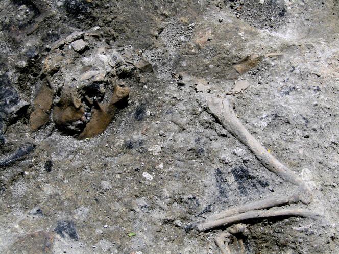 Le squelette d'un chien calciné retrouvé lors des travaux de prolongation de la ligne C du métro à Rome, en juin 2017.