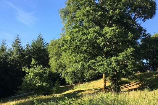 Paysage de l'arboretum de la Sédelle.