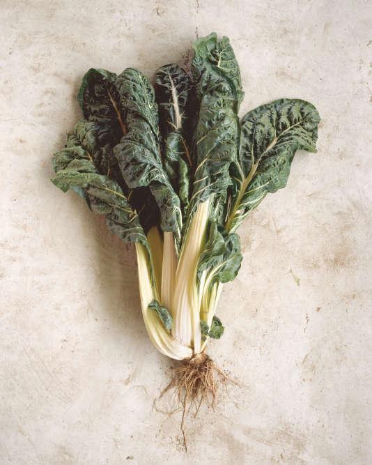 Elément d'une série, ce«portrait» d'une plante potagère donne à voir«la racine des légumes».