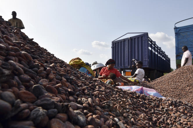 Récolte de cacao à Sobre (Côte d'Ivoire), le 6 mars.