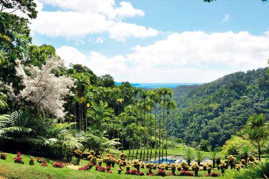 Au jardin de Balata, sur la route de la Trace, 200 essences d'arbres, en pleine de la forêt tropicale