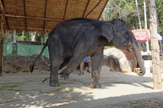 Un éléphant utilisé à des fins touristiques.