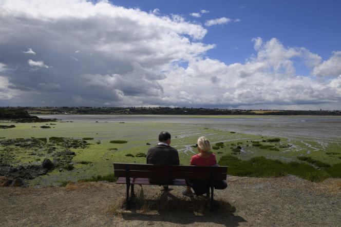 Plage recouverte d'algues vertes à Hillion, près de Saint-Brieuc en Bretagne, le 29 juin.