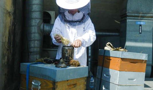 L'apiculteurEric Riquier sur le toit du Palais Garnier (Paris), le 21 juin.