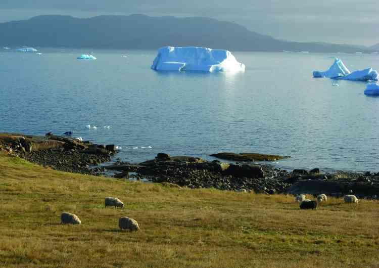Des moutons àKujataa, un paysage agricole subarctique situé dans la région sud du Groenland. Ce site est témoin des histoires culturelles paléo-esquimaudes – celles des peuples de chasseurs-cueilleurs venus d'Islande à partir du Xe siècle –, et des migrations de fermiers nordiques, de chasseurs inuits et des communautés inuits qui se sont développées à partir de la fin du XVIIIe siècle.Ce paysage témoigne de la plus ancienne introduction de l'agriculture dans l'Arctique et de l'installation d'un établissement nordique hors d'Europe.