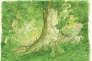 Un monde de verdure: extrait de «La Forêt millénaire», de Jiro Taniguchi.