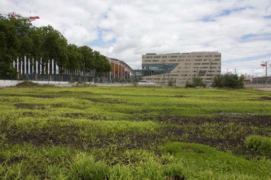 Vue des plants de chanvresur la friche le long du cours Charlemagne.