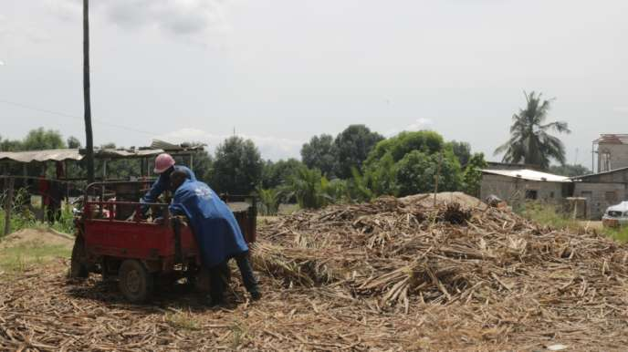 Les déchets des marchés de Douala sont ramenés chez Kemit Ecology pour être transformés en charbon.