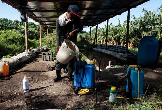Un homme prépare des pesticides avant de les épandre sur une plantation de bananes au Nicaragua le 15 juillet 2017.