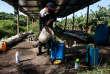 Un homme prépare des pesticides à épandre sur les bananeraies, sur l'île nicaraguayenne d'Ometepe, le 15 juillet 2017.