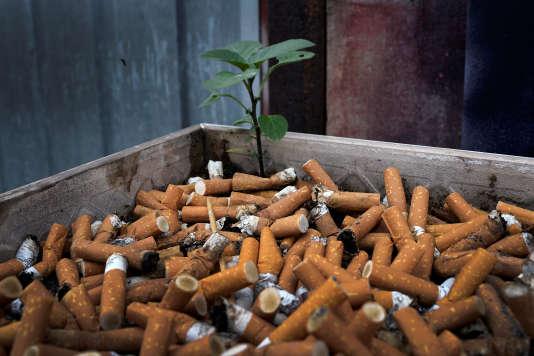 L'OMS aconstaté qu'un tiers des pays dans le monde ont mis en place des systèmes étendus pour contrôler la consommation du tabac.