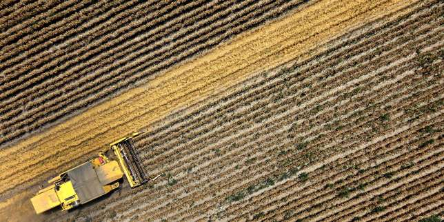 A combine harvests winter wheat of a ridge cultivation, in Witzelsdorf, Austria on July 18, 2017.   Austria OUT  / AFP / APA / HARALD SCHNEIDER