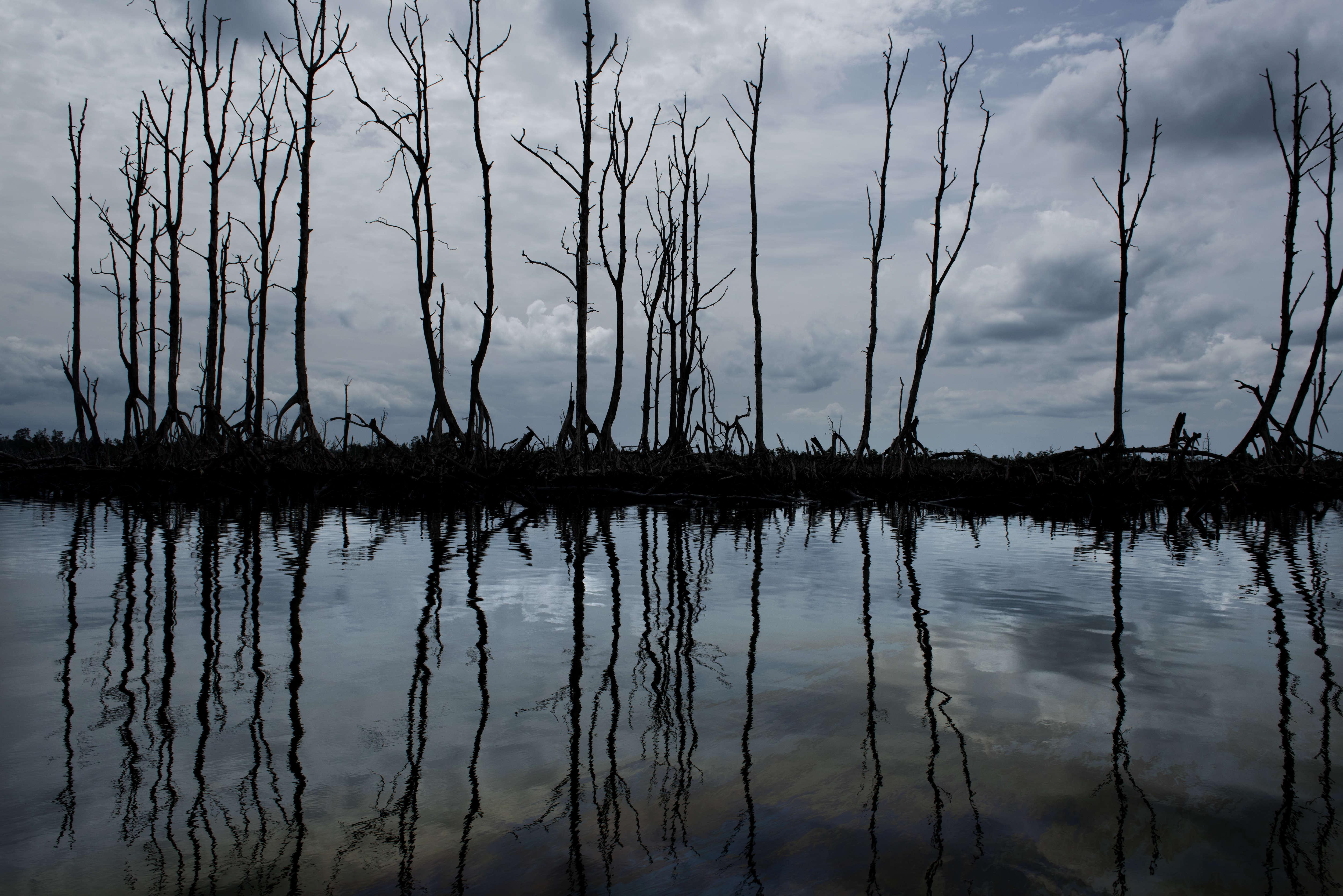 Le delta du Niger, région d'agriculteurs et de pêcheurs, est devenu l'une des plus polluées de la planète. Quelque 7000fuites de pétrole ont été comptabilisées entre 1970 et 2000.