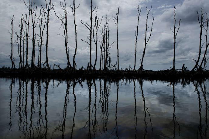 Dans le village de Bille (Etat de Rivers), dans le sud du Nigeria,la mangrove, polluée, est recouverte d'un vernis noir.