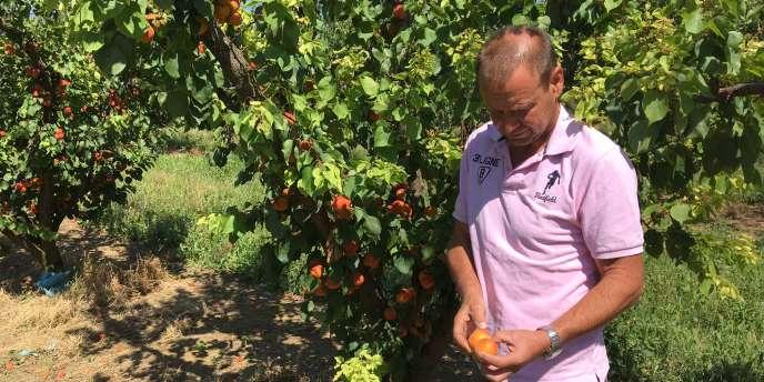 Pour certaines variétés, Alain Mounier a laissé jusqu'à 80 % de la production sur les arbres.