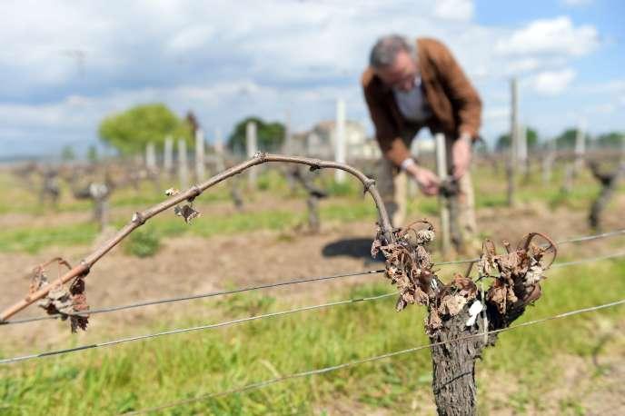 Entre les viticulteurs, les cavistes, les sommeliers, les employés saisonniers ou encore les salariés de la grande distribution, la viticulture est source de centaines de milliers d'emplois, directs et indirects.