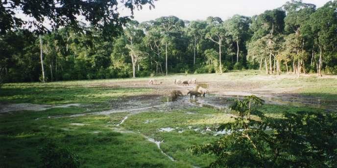 Vue d'une partie de la plus grande tourbière tropicale découverte début 2017 dans le bassin du Congo.