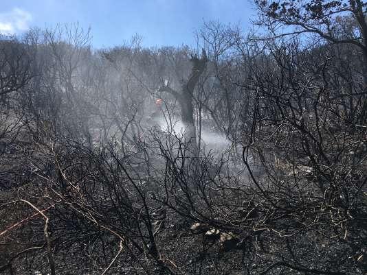 Incendie au cap Lardier, entre La Croix-Valmer et Ramatuelle (Var), le 25 juillet 2017. Photo par Stéphane Mandard.