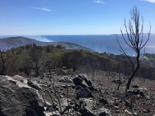 Incendie au Cap Lardier, entre La Croix-Valmer et Ramatuelle (Var) le 25 juillet 2017.