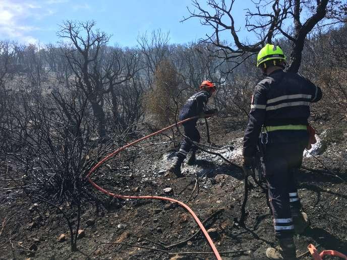 Incendie au Cap Lardier, entre La Croix Valmer et Ramatuelle (Var) le 25 juillet 2017. Photo par Stéphane Mandard.