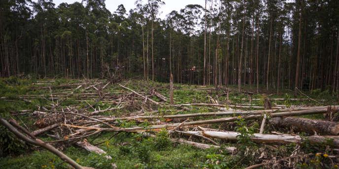 Une parcelle de forêt près de Butembo, en République démocratique du Congo, en novembre 2016.