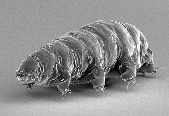 Les tardigrades présentent une résistance exceptionnelle aux conditions extrêmes.