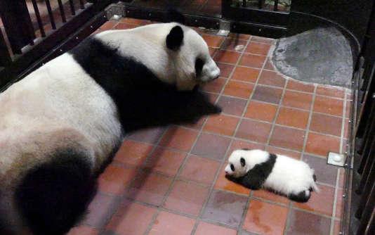 Une femelle panda et son petit au zoo de Tokyo (Japon), le 1er août 2017.