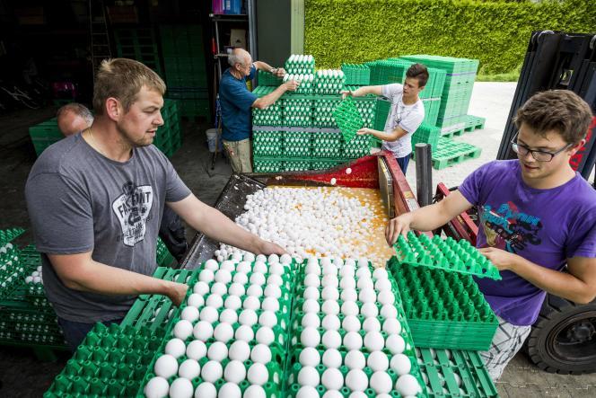 Des fermiers jettent des œufs dans une ferme, à Onstwedde, aux Pays-Bas, après une contamination au fipronil, le 3 août.