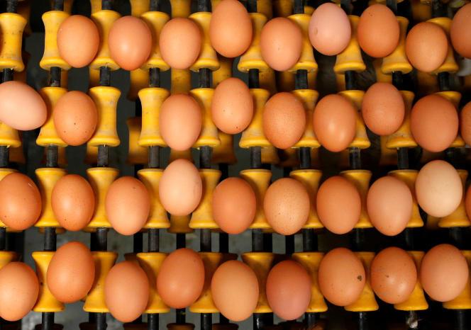 Deux centres d'emballage d'œufs dans le Nord et la Somme ont reçu une livraison contaminée au fipronil.