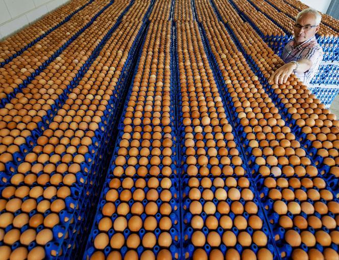 Dans une ferme avicole à Lunteren, aux Pays-Bas, le 7août.