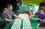 Les éleveurs détruisent des œufs potentiellement contaminés dans une ferme d'Onstwedde, aux Pays-Bas, le 3 août.