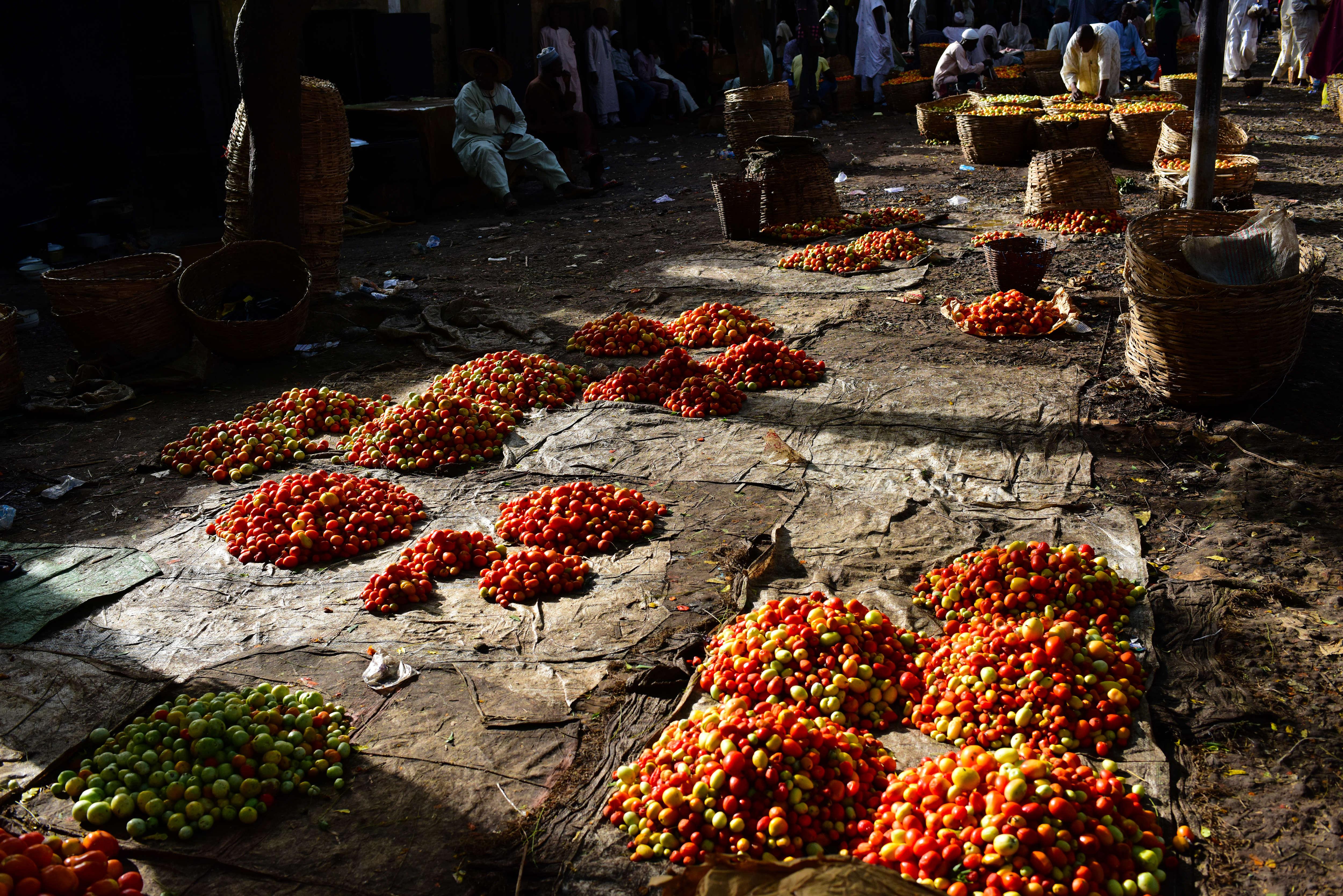 Chaque jour, des centaines de camions débordant de paniers de tomates font des allers-retours entre les champs et les marchés de Kano.