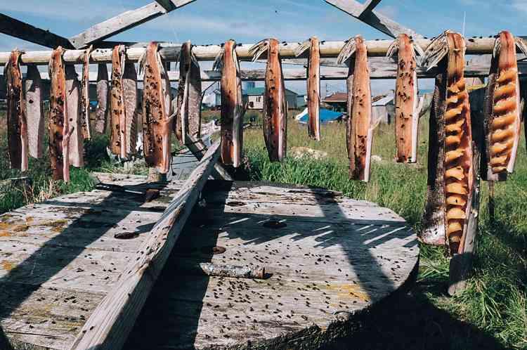 La prolifération d'insectes est l'une des conséquences de la hausse des températures. Cela menace le mode de vie de cette communauté Yupik, fondée sur la pêche et la chasse.