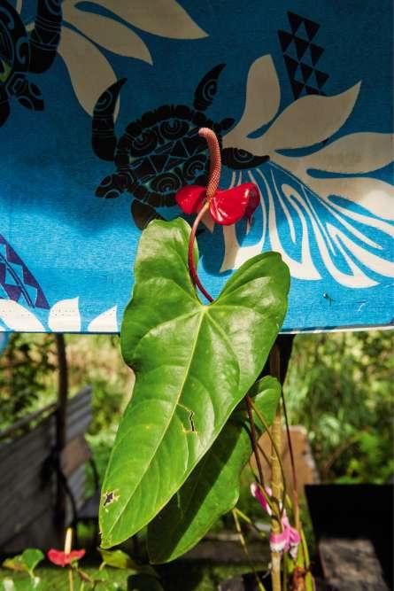 Un stand de fruits, légumes et fleurs, dont cet anthorium, sur la route d'Azareu, au centre de l'île.