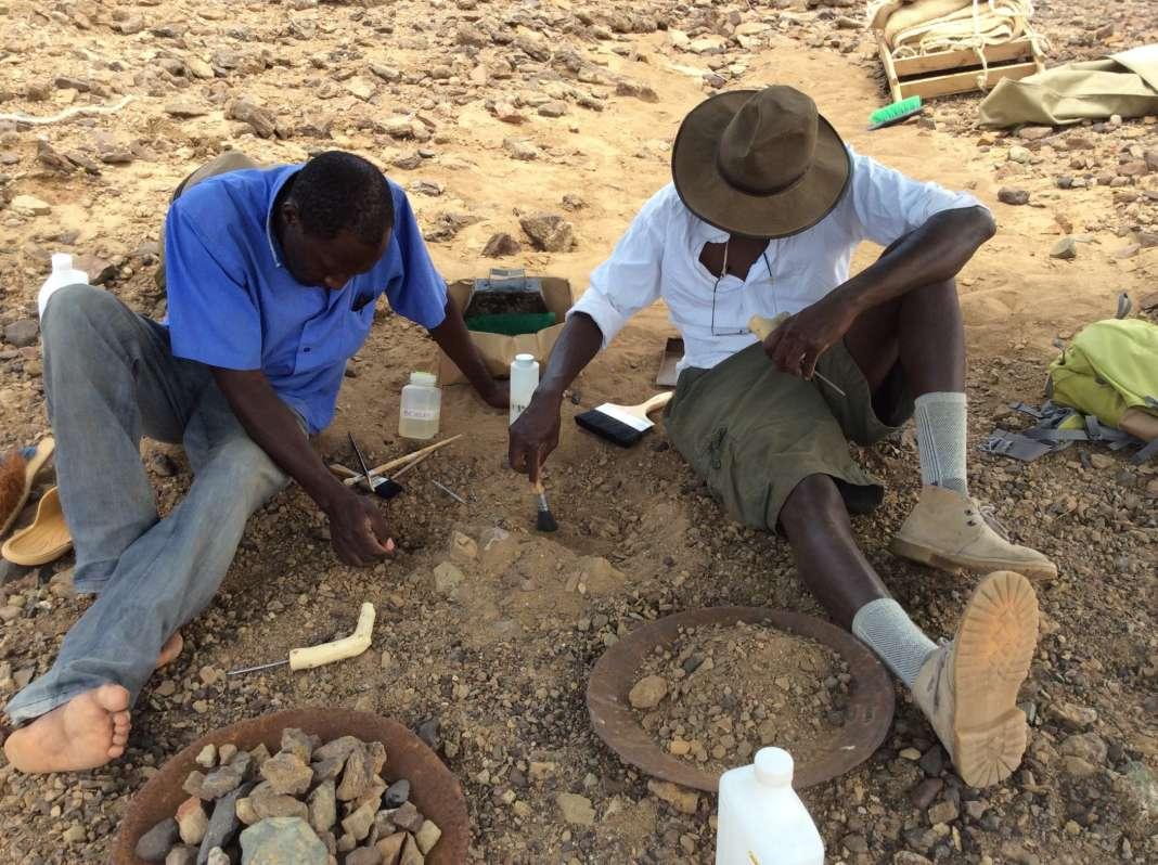 Délicate excavation du crâne fossile par Cyprian Nyete et Isaiah Nengo, sur le site de Napudet.